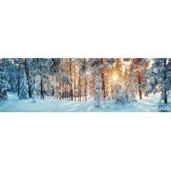 Pine Trees Covered With Snow On Frosty Evening Beautiful Winter Panorama Wallpaper Mural by Limitless Walls | Standard Canvas Fa