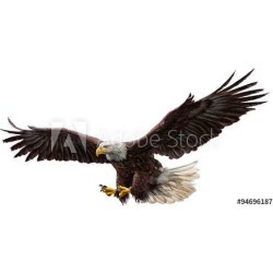 Bald Eagle Flying Draw And Paint On White Background Vector Illustration Wallpaper Mural by Limitless Walls | Standard Canvas Fa
