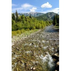 Mountain Creek - Vertical - A Clear Summer Creek (Anthracite Creek) Rushing Down From Green Mountains by Limitless Walls | Stand