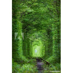 Wonder Of Nature - Real Tunnel Of Love, Green Trees Wallpaper Mural by Limitless Walls | Standard Canvas Fabric | Small 5'5""