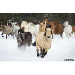 Horses Running On A Ranch In Winter; Montana, United States Of America Wallpaper Mural by Limitless Walls | Standard Canvas Fabr