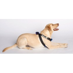 Blue Canine Travel Safe Harness, Medium 2