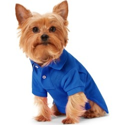 Ralph Lauren Big Pony Mesh Dog Polo Shirt in Bright Royal - Size L found on Bargain Bro Philippines from Ralph Lauren for $45.00