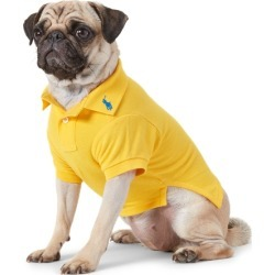 Ralph Lauren Cotton Mesh Dog Polo Shirt in Yellowfin - Size M found on Bargain Bro Philippines from Ralph Lauren for $40.00
